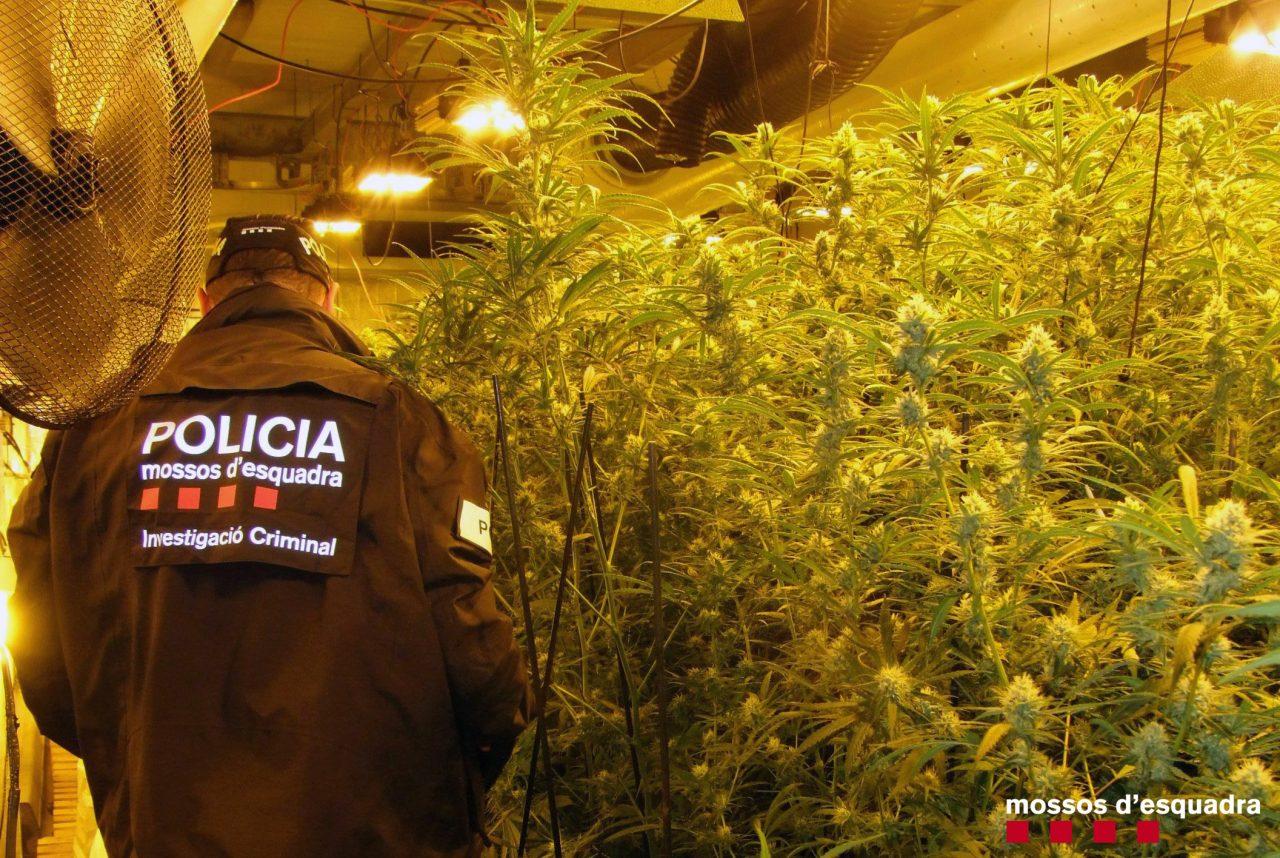 200224-F-NdP28-Desmantellada-plantació-marihuana-i-detenció-3-homes-a-Cambrils-1280x858.jpg